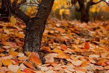 AUTUM...mmm / Autum by Personally selected products