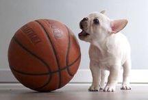 bulldog ballers