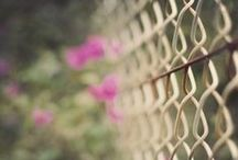 Fences / by Isabel Pavia