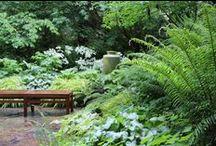 Jozefow ogrod lesny
