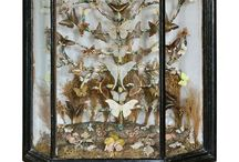 Cabinet of Curiosities / by Julia Marie Chew