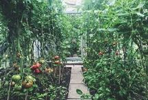 plantsarefriends / plants plants plants