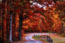 Autumn  / by Mallery Hamill