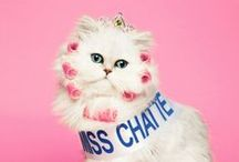 Cat Lady / by Michaela Ragan