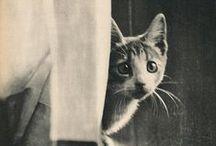 Crazy Cat Lady Album