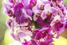 Pantone Color of the Year Fashion  / ORCHID/LILAC/LIGHT PURPLE