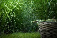 Garden / by Sofi Svensson
