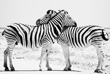 Animals / by Lindsey Inskeep