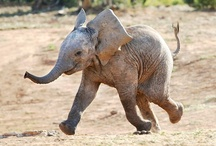 My Elephant Fetish / by Lindsey Inskeep