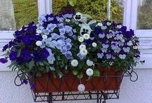 Potted Plants / by Nancy Hugo CKD & DesignersCirclehq.com