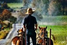 Amish Country / Its hard work and sacrifice, living in an Amish paradise. / by Janine Renberg