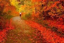 Ontario Seasons