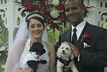 Smooches for Pooches / when you love your dog too much to leave her out of your wedding!