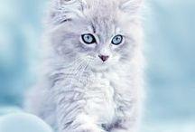 Cat-aholic