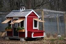 Chicken House Ideas