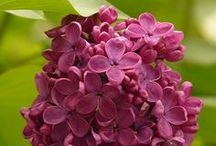 Flowers / Floral Inspiration / by Gail Bunn-Feilde