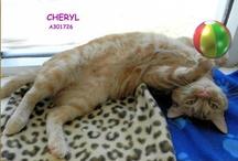 Adoptable Pets in Sarasota / Loving little pets that need loving homes in Sarasota, Florida