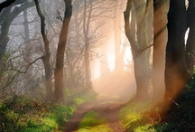 A path less traveled  / by Nanette Linder