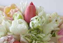 Gardening and flowers / #garden, #flower, #gardening, #fiori, #giardinaggio, #piante