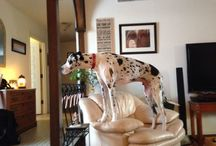 Great Danes / Great Danes  / by Cathy