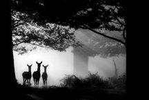 Black and White / Beautiful black & white photography