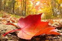 Autumn Harvest / The Autumn season is my favorite.  There is an earthy, melancholy magic to this ambient season that resonates deeply with my spirit and soothes my soul.  I should love to live in eternal Autumn...for I am one of the 'Autumn People'! / by Wens