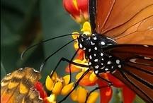 Natureza / Imagens lindas de nossa natureza...fuiiii