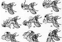 BUGGY / Beetle inspirations.