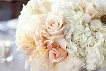 Weddings / by Charlotte Harvey-Barclay