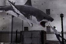 Sharknado!!! / by Jessa Hokama