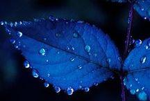 Something Blue / Blue