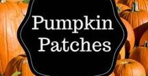 Pumpkin Patches in Hampton Roads / Enjoy the Fall - find pumpkin patches with pick your own pumpkins, corn mazes, harvest hoedowns, hayrides, homemade ice cream and more.  Farms in Williamsburg, James City County, Glouchester, Toano, Surrey, Newport News and more!