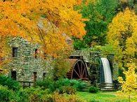 Graceful Autumn