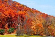Fall ❦ Colors of Autumn