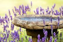 Gardens, Herbs & Flowers