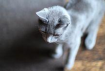 Kitties! / by Rachael Davis