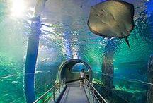 Underwater Dreamscapes