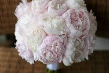 Wedding Bouquets / Wedding Bouquets - Succulents, Peonies, Ranunculus, Roses, Orchids, Hydrangea, Dahlias, Dusty Miller