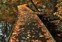 A Path to Follow / by Susan Harbourt