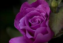 Purple! / by Jordan Rinker