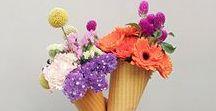Autumn Flowers / Enjoy the beauty of autumn flowers!