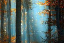 Fabulous Findings of Fall! / by Reba Sherwood