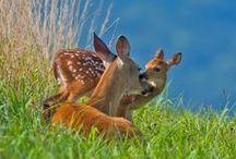 Awesome Animals! / by Reba Sherwood