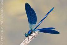 ○○  Beautiful creatures / けなげに生きている生物たちも愛おしく美しい。 / by Isao Wakasugi