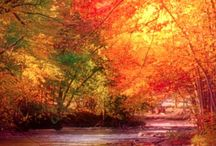 Autumn / Inspiration / by Christine Luongo