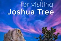 Joshua Tree / Guides / information about Joshua Tree and the Park