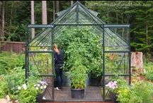 My Greenhouse / I'm in love with my greenhouse. These posts will show you why! / by Mavis Butterfield
