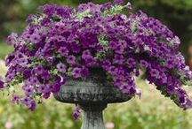 GARDEN - flowers / by Pam Tobias