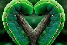 HEARTS <3 / by Jeri *