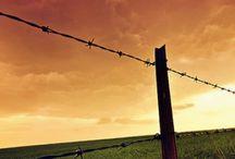 Love the south<3 / by Jenn Buchholz